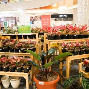Tambah Koleksi Tanaman Hias, Datang ke Trans Studio Mall Cibubur Yuk!