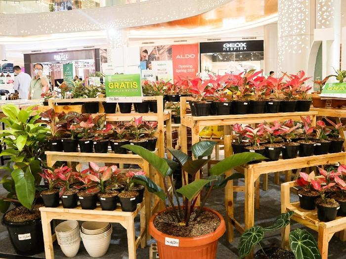 Tanaman Hias di Trans Studio Mall Cibubur