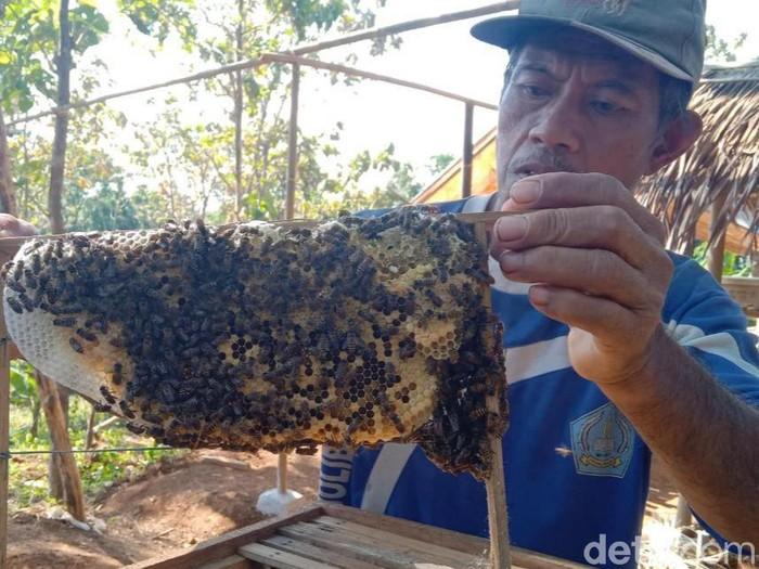Budidaya madu di Cirebon