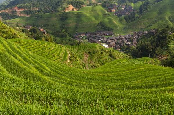 Penduduk Teras Sawah Longji memang mengandalkan hidup dari bertani. (Getty Images/iStockphoto)