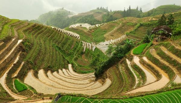 Berada di Desa Ping An, teras sawah ini disebut juga dragons backbone alias punggung naga.(Getty Images/iStockphoto)