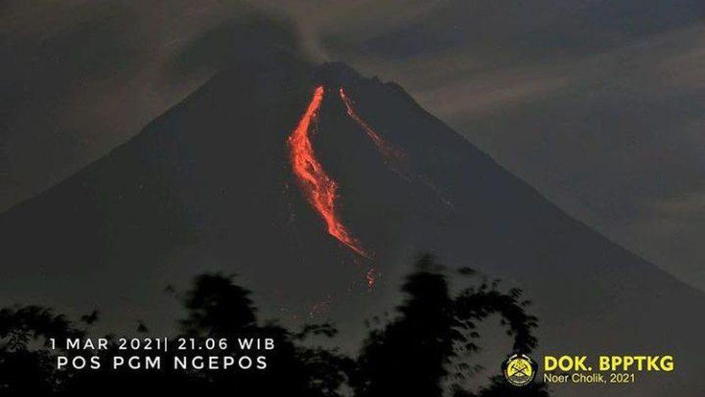 Gunung Merapi Erupsi Malam Ini, Awan Panas Meluncur Sejauh 1,5 Km