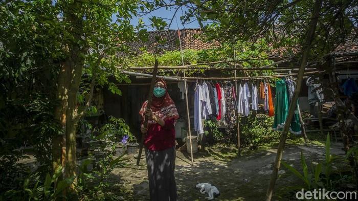 Fryski (28) memetik bahan jamu di Desa Kiringan, Bantul, Selasa (16/2/2021).