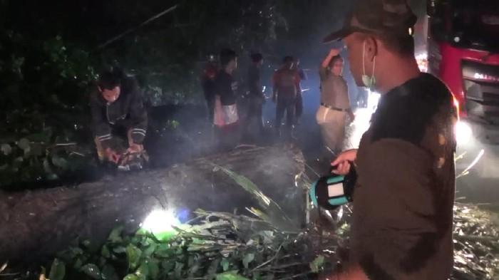 Pohon tumbang di Sumedang dievakuasi
