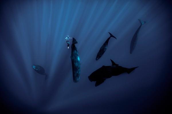 Beberapa momen paling berkesan adalah saat ia berinteraksi dengan kehidupan bawah laut. Ia pernah mendekati paus sperma raksasa di lepas pantai negara kepulauan Mauritius.