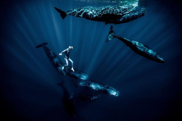 Coba lihat aksi dari Guillaume Nery ini, begitu mengesankan. Iamembutuhkan waktu sejenak untuk menenangkan diri, memakai masker, mengambil napas lalu menyelam ke dalam laut. Beberapa menit ia lalui di dalam air.