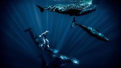 Terbang di Bawah Air Bersama Legenda Penyelam Bebas