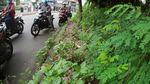 Parah! Trotoar di Perbatasan Tangsel-DKI Ini Dipenuhi Tanaman Liar-Sampah