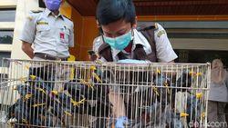 Penyelundupan 633 Burung dan Kura-kura dari Makassar ke Surabaya Digagalkan