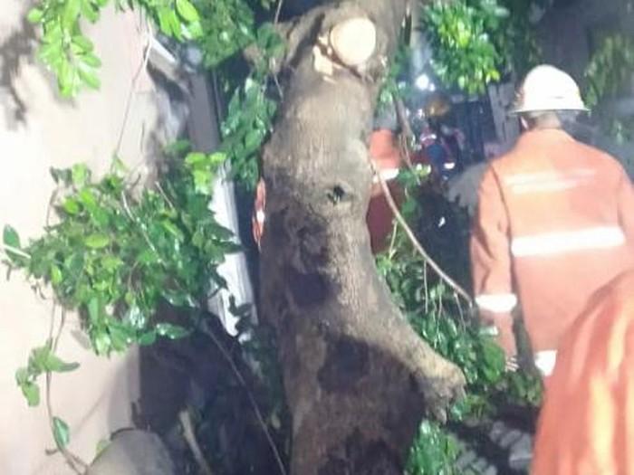 pohon tumbang di surabaya