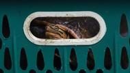 Ratusan Satwa Ilegal Diamankan dari Upaya Penyelundupan