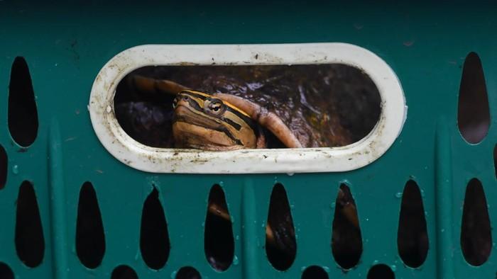 Ratusan satwa ilegal diamankan dari upaya penyelundupan di Surabaya, Jawa Timur. Satwa yang diamankan di antaranya 633 burung dan kura-kura asal Makassar.