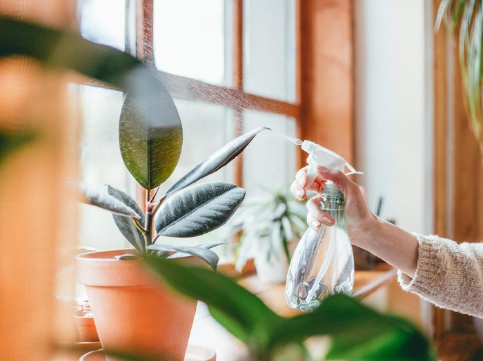 Close up of womans hand spraying water on houseplants