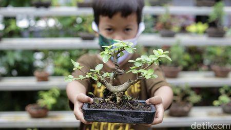 Warga Kampung Bali Berkreasi Positif lewat Tanaman Bonsai