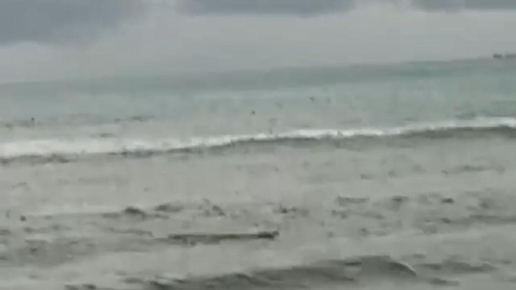 Buaya Muncul Berkali-kali di Pantai Tiku, Spanduk Peringatan Dipasang