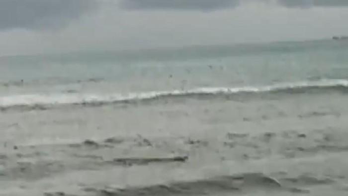 Buaya Muncul di Pantai Tiku Agam (Foto Diperoleh dari BKSDA)