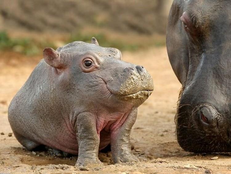 Ini jadinya bila hewan tidak memiliki leher.