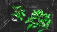 5 Tanaman Hias Herbal, Bisa Mempercantik Rumah Sekaligus Bumbu Masakan