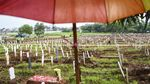 Lahan Makam COVID-19 di TPU Bambu Apus Sudah Penuh
