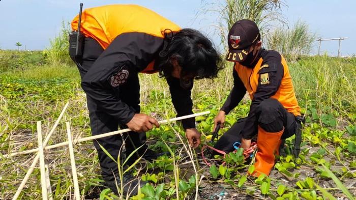 Penanaman mangrove di pesisit Sukabumi