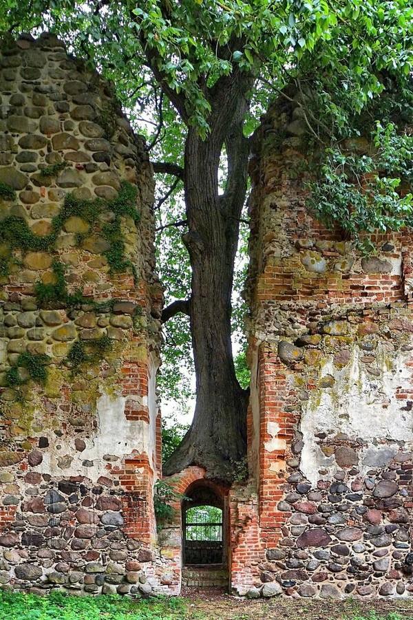 Pohon tumbuh di gerbang Kastil Putzar yang terbengkalai di Jerman.