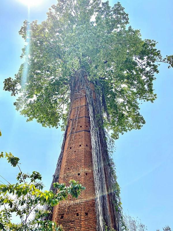 Pohon tumbuh dari dalam cerobong asap besar yang terbengkalai.