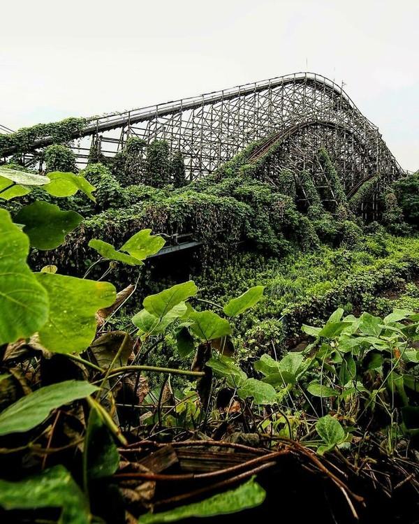 Jalur roller coaster yang diselimuti tumbuhan rambat.