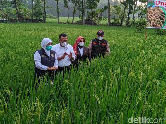 Belum ada pengetatan di Jatim terkait ditemukannya Corona B117 di Karawang, Jawa Barat. Pemprov Jatim masih melakukan tracing serta kuratif.