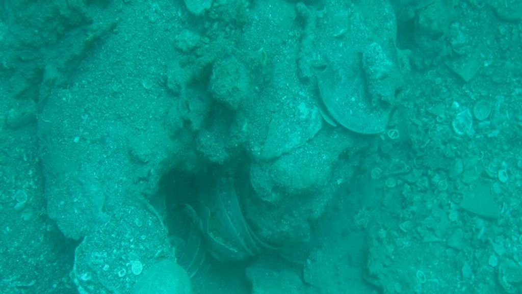 Kabar Harta Karun Melimpah Terkandung di Lautan Selayar