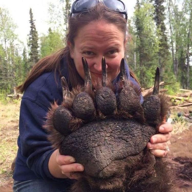 Hewan ukuran besar