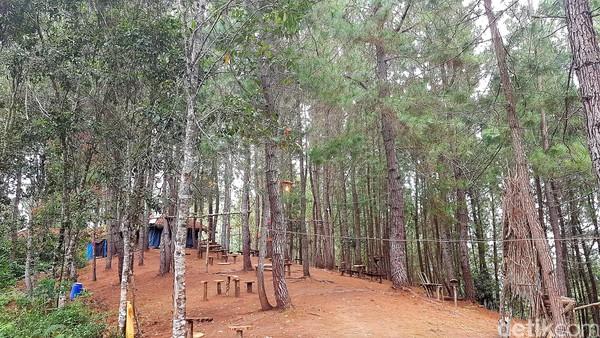 Kawasan wisata hutan pinus Lenong juga telah dilengkapi fasilitas gazebo, serta puluhan tempat duduk dari potongan pohon pinus.