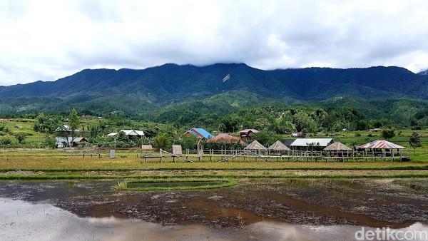 Hutan pinus Lenong dijamin mampu membuat para pecinta keindahan alam berlama-lama menghabiskan waktu di tempat ini.