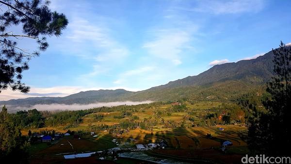 Hutan pinus Lenong berada di Desa Tondok Bakaru, Kecamatan Mamasa, Kabupaten Mamasa. Kawasan hutan pinus seluas dua hektar ini, menawarkan sejumlah keindahan.