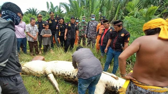 Jajaran Kepolisian, dan TNI AL berhasil menangkap buaya pemangsa bocah 8 tahun asal Bengalon (istimewa)