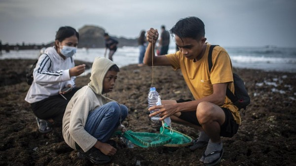 Nyale diketahui merupakan sebutan bagi orang Lombok untuk cacing laut warna-warni yang diyakini sebagai jelmaan Putri Mandalika.