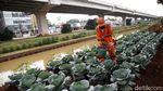 Penampakan Kolong Tol Becakayu yang Disulap Jadi Kebun Sayur
