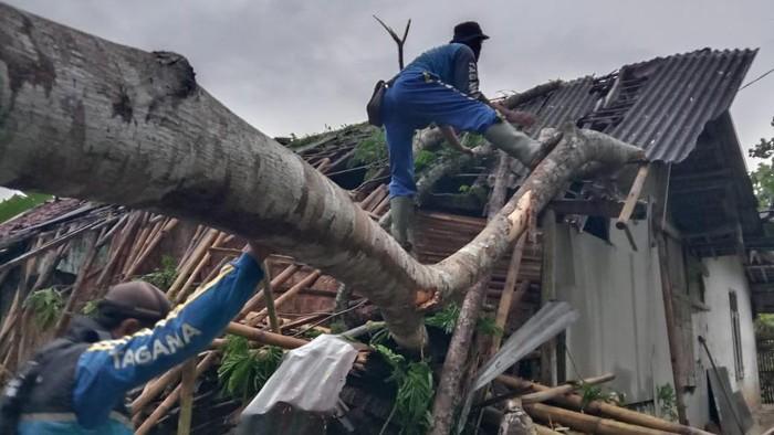 Petugas tengah mengevakuasi pohon tumbang yang menimpa rumah warga di Pangandaran.