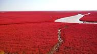 Foto: Pantai Semerah Darah yang Sungguh Ada