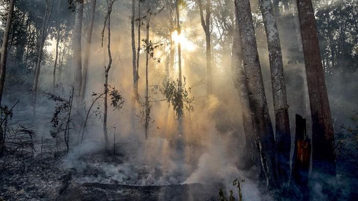 Kebakaran hutan terjadi di sejumlah titik di Pulau Sumatera. Berdasarkan data BMKG pada Rabu (3/3/2021) jumlah titik panas di Riau sebanyak 34 titik.