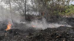 Waduh! Hutan Hujan Sumatera Terancam Dicoret dari Warisan Dunia UNESCO