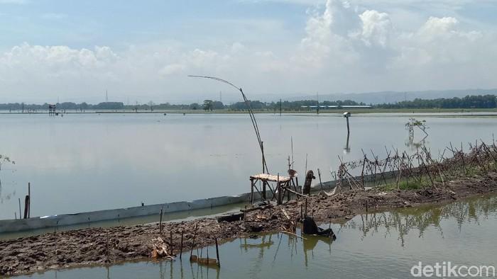 Areal persawahan warga di Kudus yang masih terendam banjir, 5/3/2021
