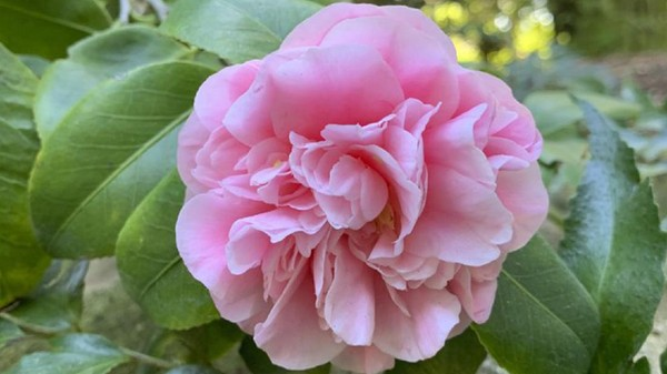 Untuk Japanese Garden pembangunnya dilakukan sejak akhir 1960-an.