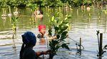Mengenal Lebih Dekat 10 Flora-Fauna Indonesia