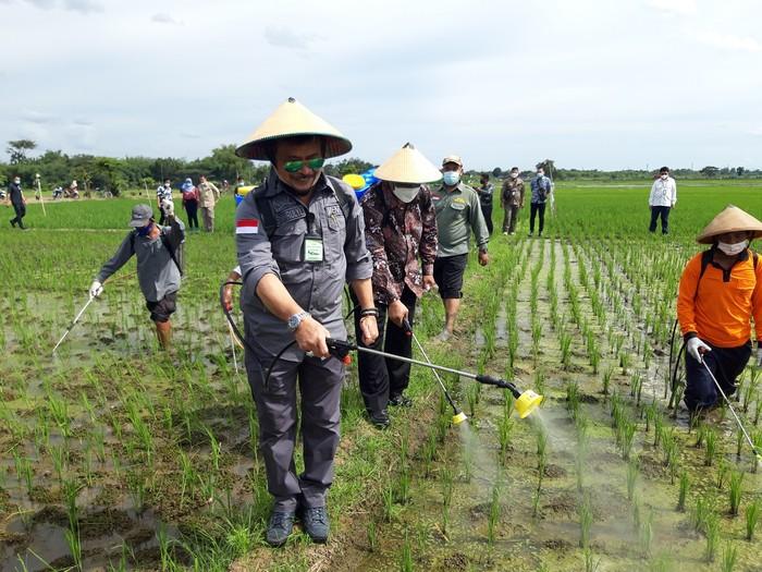 Menteri Pertanian,  Syahrul Yasin Limpo, menyemprot tanaman padi bersama masyarakat dalam kunjungannya di Desa Dibal, Kecamatan Ngemplak, Kabupaten Boyolali, Jumat (5/3/2021)