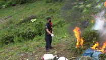 Polres Jakbar Temukan Ladang Milik Bandar 115 Kg Ganja di Madina Sumut