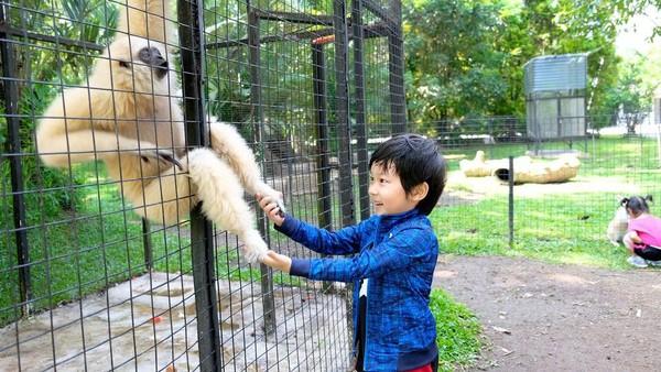 Menariknya lagi, resort yang satu ini juga dilengkapi dengan Kebun binatang mini yang ada di area taman. Bagi traveler yang membawa si buah hati, tentu akan sangat dimanjakan (dok The Hill and Resort Sibolangit/Facebook)
