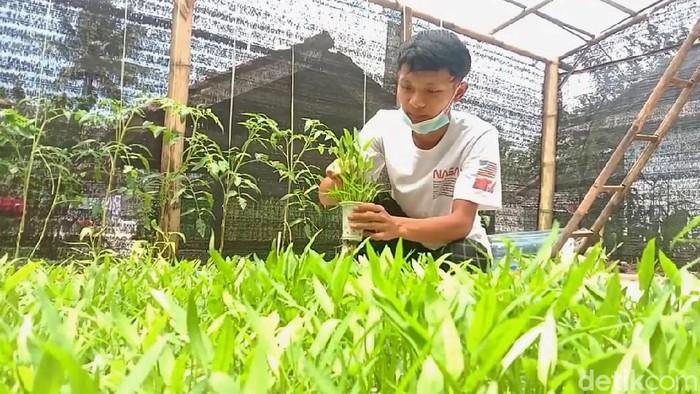 Seorang pelajar SMK di Kabupaten Sumedang, Jawa Barat sukses membuat inovatif baru dengan menanam tanaman Hidroponik di masa pandemi COVID-19. Ia pun sukses menjual hasil tanamannya hingga jutaan rupiah.
