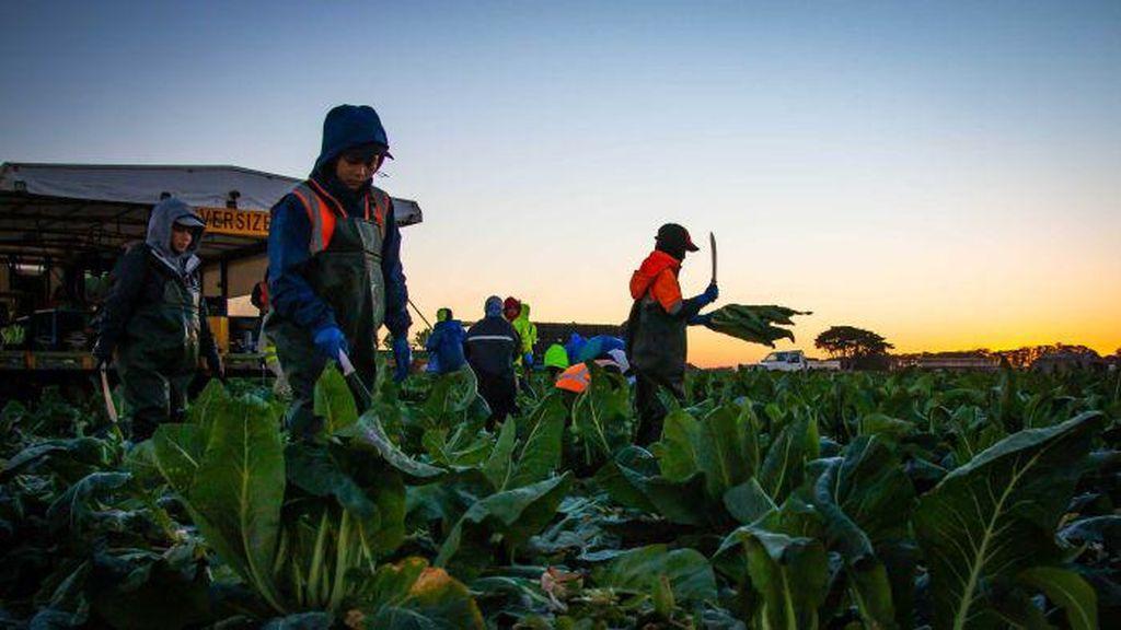 Seruan Pengampunan Bagi Pekerja Gelap di Australia Muncul Lagi karena Kekhawatiran Vaksinasi