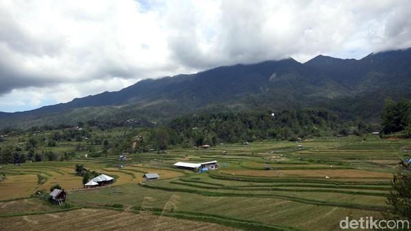 Wisatawan juga bisa melihat panorama alam khas pedesaan di Kabupaten Mamasa. (Abdy Febriady/detikcom)