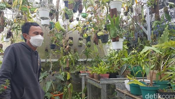 Andarias pengelola TBO menyebutkan, pengembangan tanaman anggrek cukup menjanjikan kendati masa pandemi virus corona. Oleh karenanya, dia berusaha memboomingkan tanaman anggrek, untuk membantu menopang perekonomian warga, akibat lesunya kunjungan warga pada sejumlah spot wisata alam di daerah ini.
